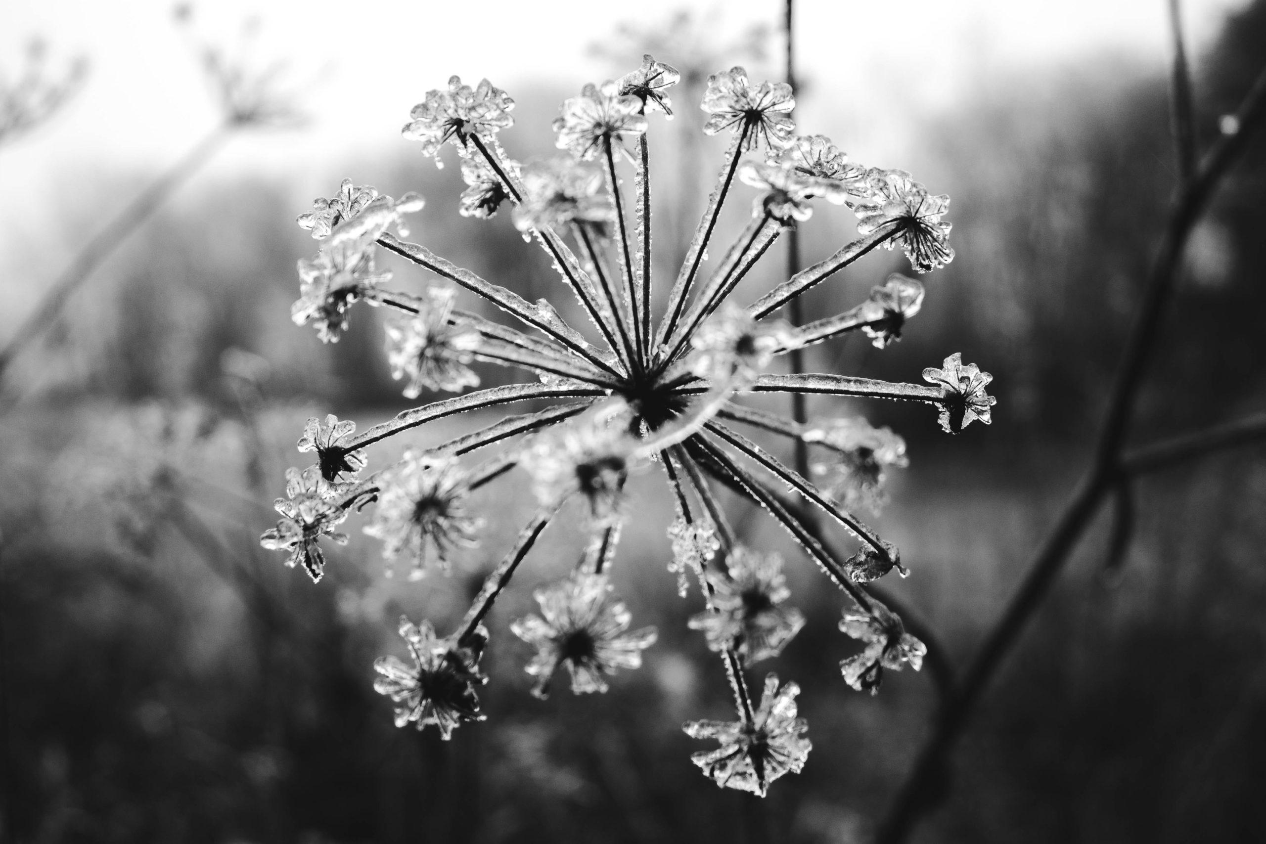 Beauté et hiver : pourquoi ça matche pas ?  5 gestes beauté d'hiver